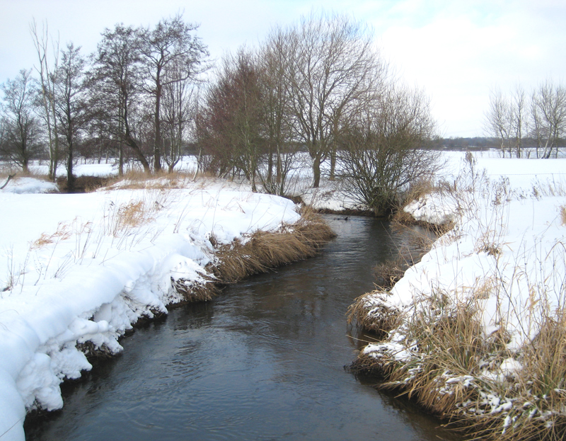 Winter an der Au
